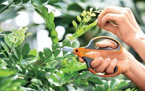 Вибираємо інструменти для обрізки дерев і чагарників